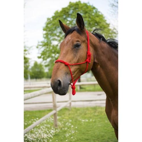 bbee193f736f5 Halter dla konia - różne kolory Sklep Jeździecki Obiegły